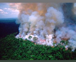 Brazil's Amazon rainforest is burning at a record rate | amazon rainforest | amazon forest